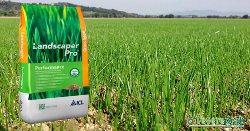 Tevereprati a Roma è fornitore di sementi per tappeti erbosi sportivi o ricreazionali