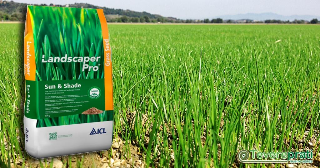 Tevereprati a Roma è fornitore di sementi per tappeti erbosi in ombra